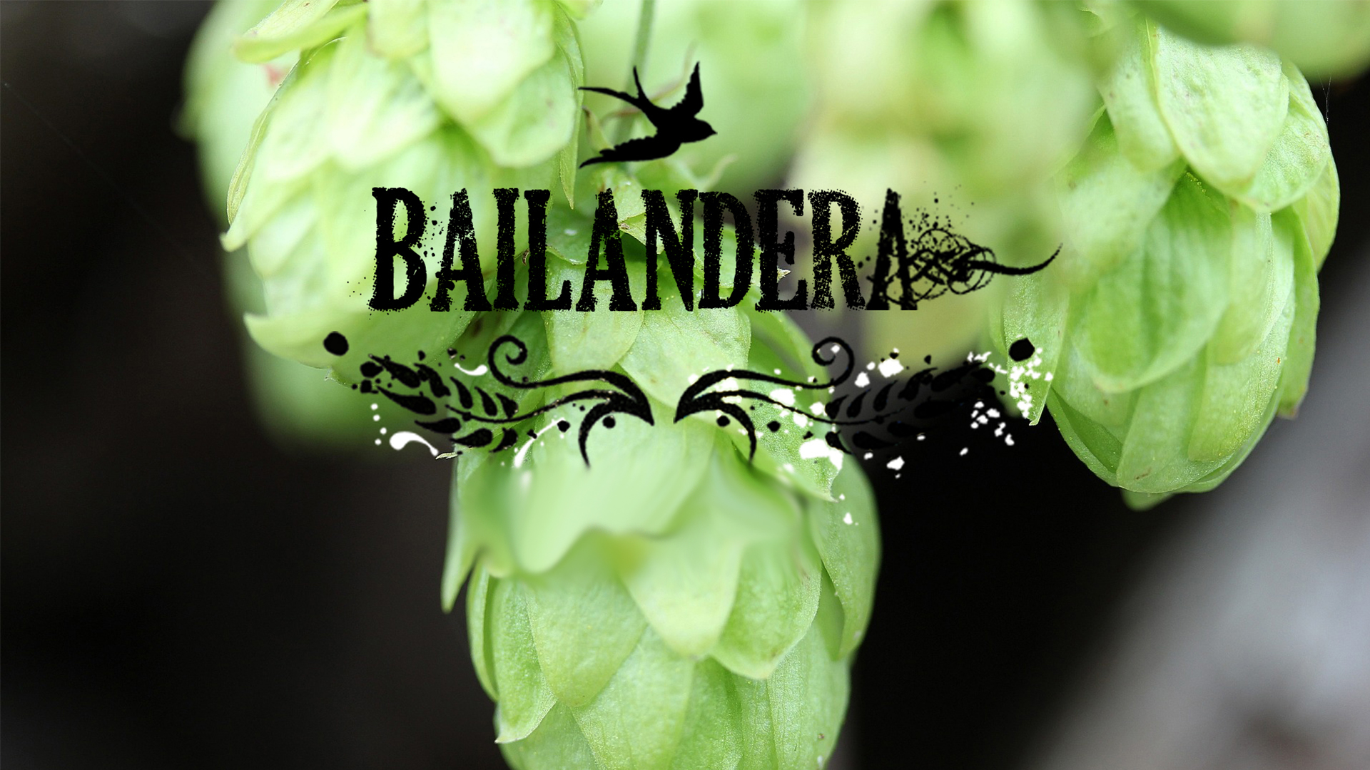 Cerveceria Bailandera